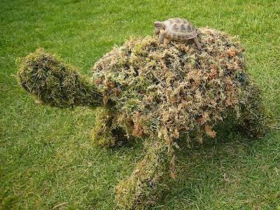 создание зеленых скульптур в саду своими руками