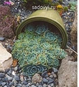 суккуленты в саду, композиции фото