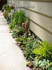 суккуленты в саду, дизайн цветников фото