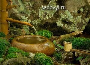 как вырастить декоративный мох в саду