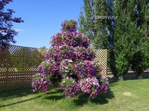 ампельные петуньи в саду цветники
