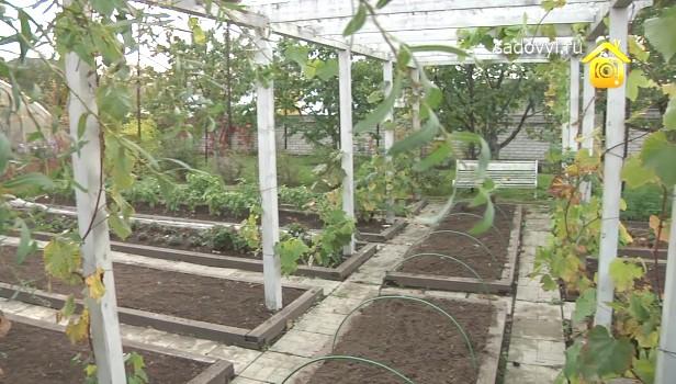 Идеи для дома огорода