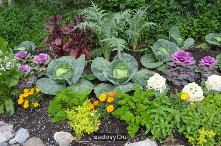 Смешанные посадки овощей