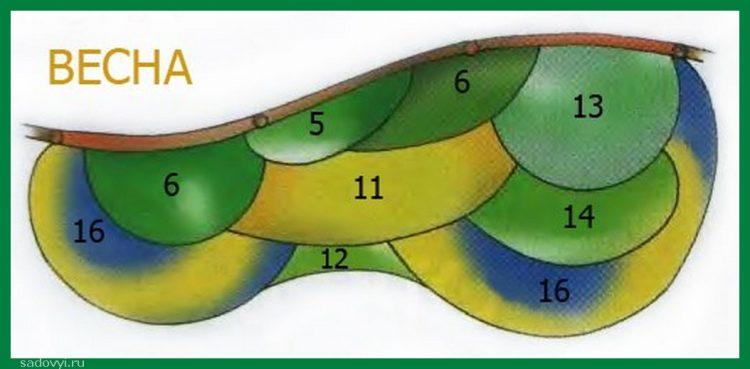 Клумба непрерывного цветения. Схема и названия цветов