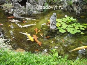 разведение рыбы в искусственном водоеме (в пруду)