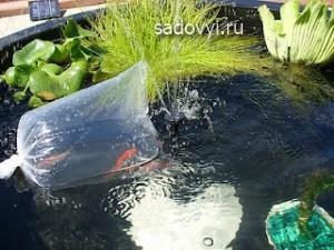 как разводить рыбу в пруду