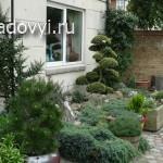 садовый бонсай ниваки своими руками на примере сосны