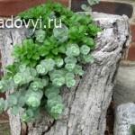 tree trunk planter - Обустройство загородного дома и участка своими руками - Суккуленты в саду. Дизайн цветников,12 фото