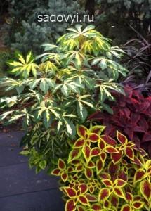 1 - Обустройство загородного дома и участка своими руками - Декоративные растения с красивыми листьями для сада. Примеры миксбордеров