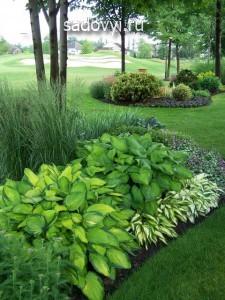 2 - Обустройство загородного дома и участка своими руками - Декоративные растения с красивыми листьями для сада. Примеры миксбордеров