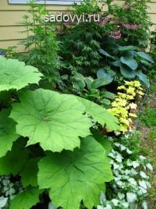 3 1 - Обустройство загородного дома и участка своими руками - Декоративные растения с красивыми листьями для сада. Примеры миксбордеров