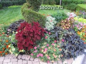5 - Обустройство загородного дома и участка своими руками - Декоративные растения с красивыми листьями для сада. Примеры миксбордеров