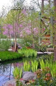 ирисы у водоемов, выращивание ирисов в саду