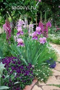 как оформить клумбы с ирисами в саду