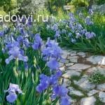 7b95337a6a11ff61f4389f54956fa92d - Обустройство загородного дома и участка своими руками - Ирисы в саду. Советы, как оформить клумбы