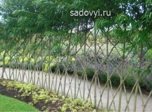 живая изгородь из ивы на даче фото