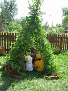 шпалеры для вьющихся растений своими руками, фото