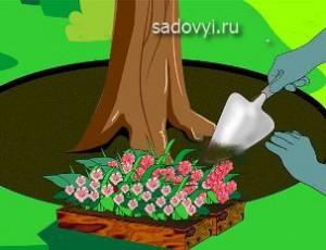 клумба под деревом своими руками