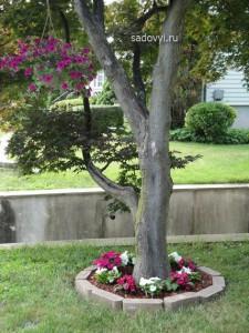 клумба из петуний в саду фото