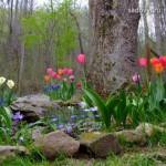 как оформить цветочную клумбу вокруг дерева фото