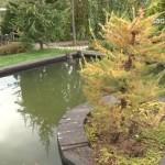 21 - Обустройство загородного дома и участка своими руками - Интересные идеи для сада от Елены Седовой. Фото и видео