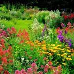 4 - Обустройство загородного дома и участка своими руками - Цвет в цветниках - значение, подбор, действие цвета на человека