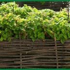 cd948d2be1b30c0e976217fe0e818813 - Обустройство загородного дома и участка своими руками - Плетёные заборы, 14 красивых фото