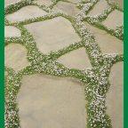 image - Обустройство загородного дома и участка своими руками - Купите семена мшанки, посейте и на следующий год к середине лета получите такой покров!