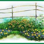 vnorTaIGoDs - Обустройство загородного дома и участка своими руками - Клумба непрерывного цветения. Схема и названия цветов