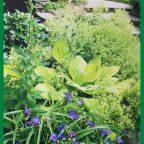 d - Обустройство загородного дома и участка своими руками - Полив - важнейший прием ухода за растениями сада