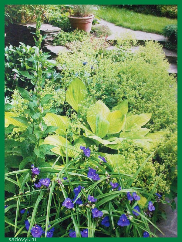 Полив - важнейший прием ухода за растениями сада