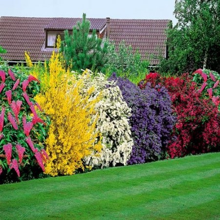 Советы по выбору растений для живой изгороди на вашем участке