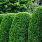 hedge - Обустройство загородного дома и участка своими руками - Советы по выбору растений для живой изгороди на вашем участке