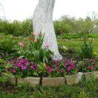 Mdc9 qyKtog - Обустройство загородного дома и участка своими руками - Что посадить рядом с яблоней? Совместимость с другими растениями