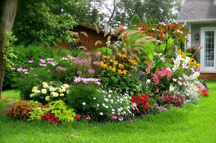img5cf04b2c70fa35 - Обустройство загородного дома и участка своими руками - Многолетние цветы для дачи, обзор