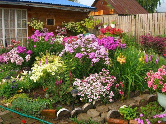 tsvetuschie rasteniya vazhnaya dekorativnaya chast uchastka - Обустройство загородного дома и участка своими руками - Многолетние цветы для дачи, обзор