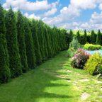 zhivaya izgorod 750x494 1 - Обустройство загородного дома и участка своими руками - Неприхотливая живая изгородь. Популярные растения для живой изгороди
