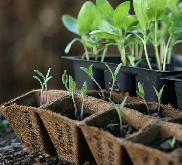 1 - Обустройство загородного дома и участка своими руками - Как подготовить землю для рассады. Народный метод