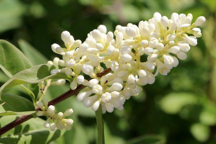 5682088 - Обустройство загородного дома и участка своими руками - Засухоустойчивый сад - растения для сада, многолетники