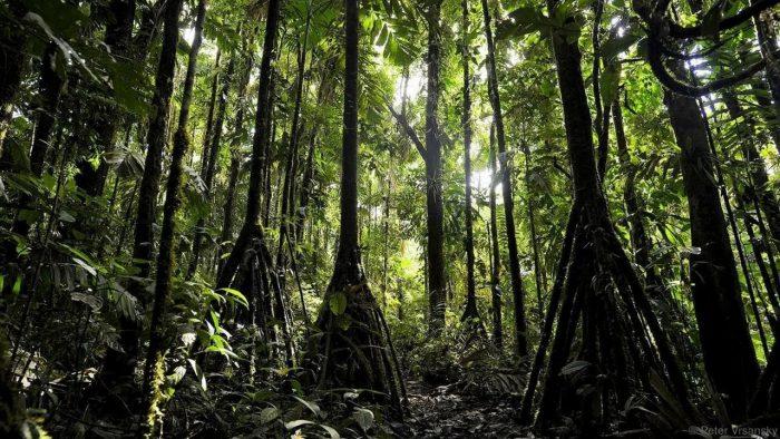 4 1 - Обустройство загородного дома и участка своими руками - Удивительное дерево, над загадкой которого ученые бьются до сих пор